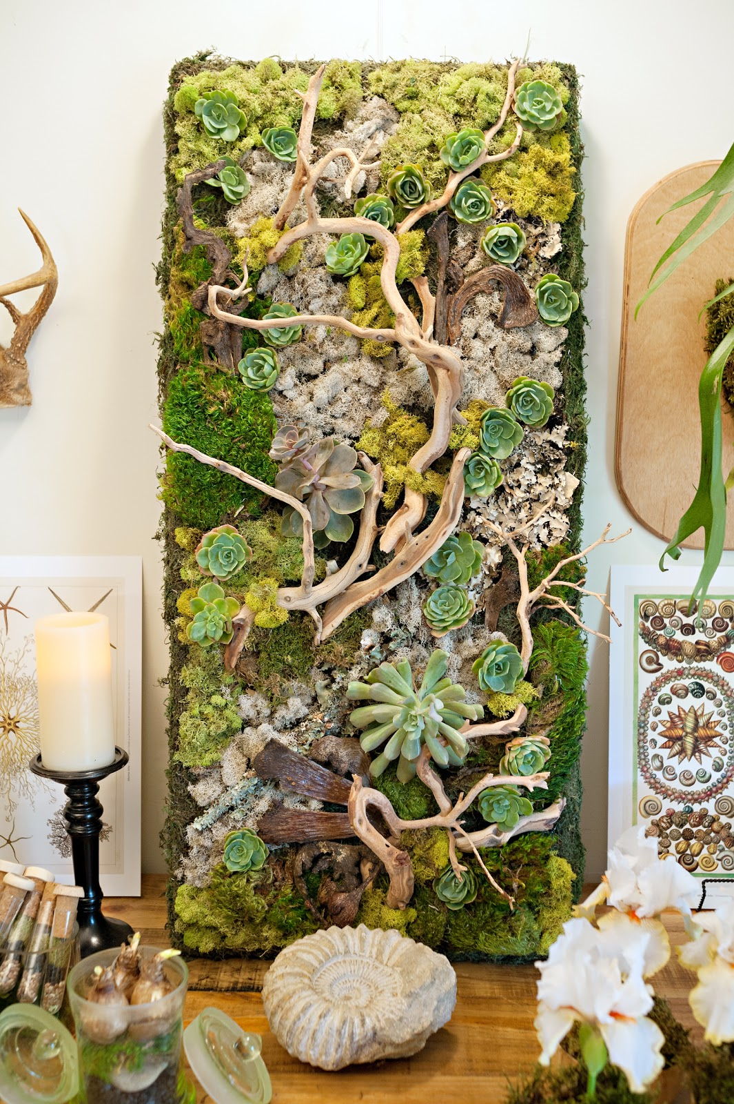 10 embellished wall panel showcases succulents and driftwood