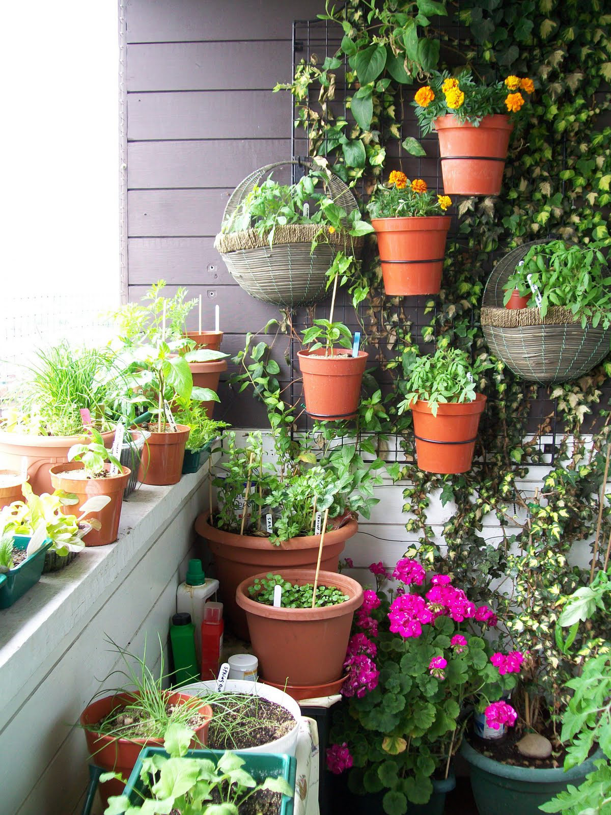 how to grow vegetables on your balcony