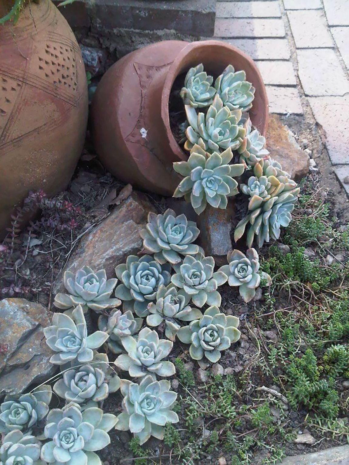 Succulents Garden Ideas you can make interesting compositions with succulents succulents cover the entire surface of the soil with their dense foliage succulent leaves vary in 3 Living Waters