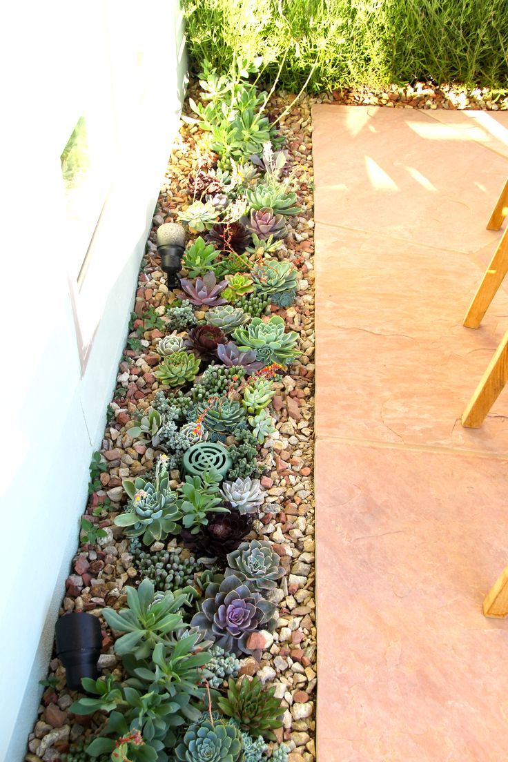 Succulents Garden Ideas you can make interesting compositions with succulents succulents cover the entire surface of the soil with their dense foliage succulent leaves vary in 6 By The Wayside