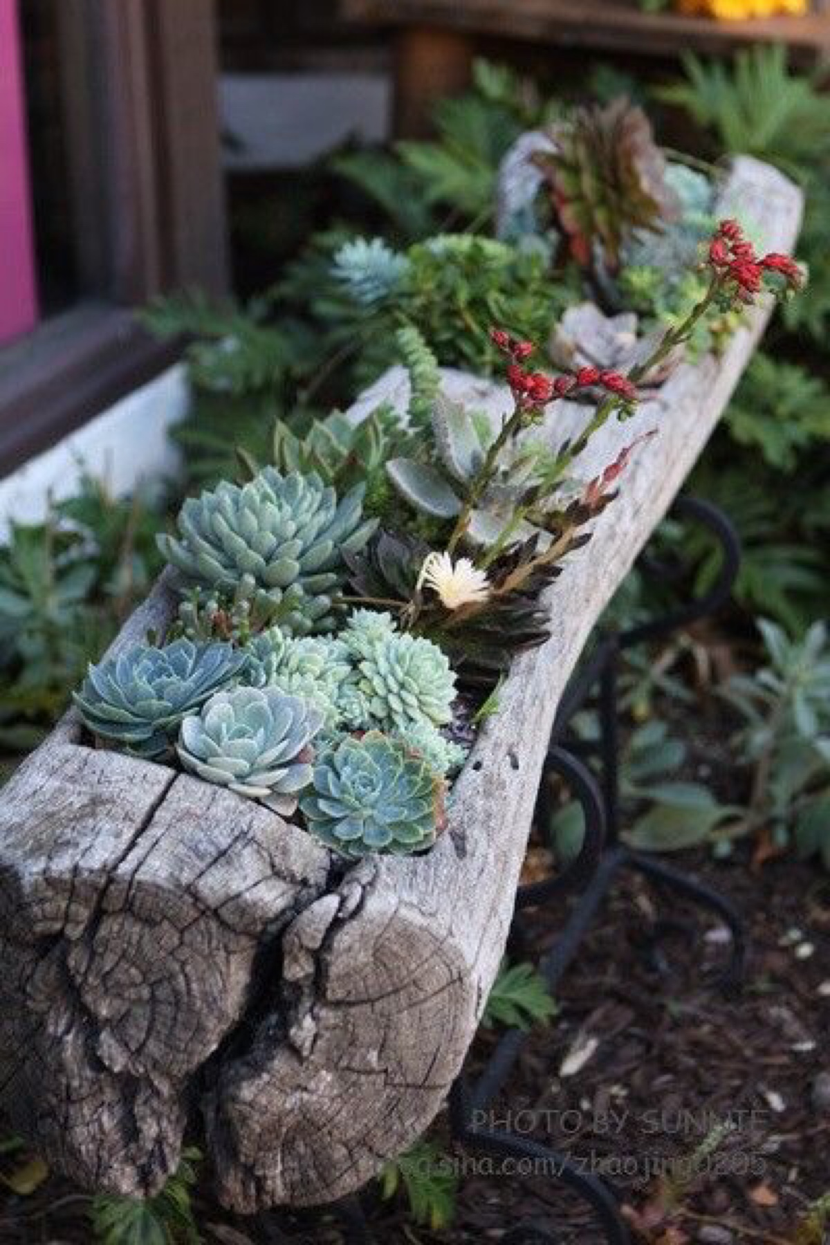 Succulents Garden Ideas 26 best succulent garden ideas around the world 10 By The Old Water Trough