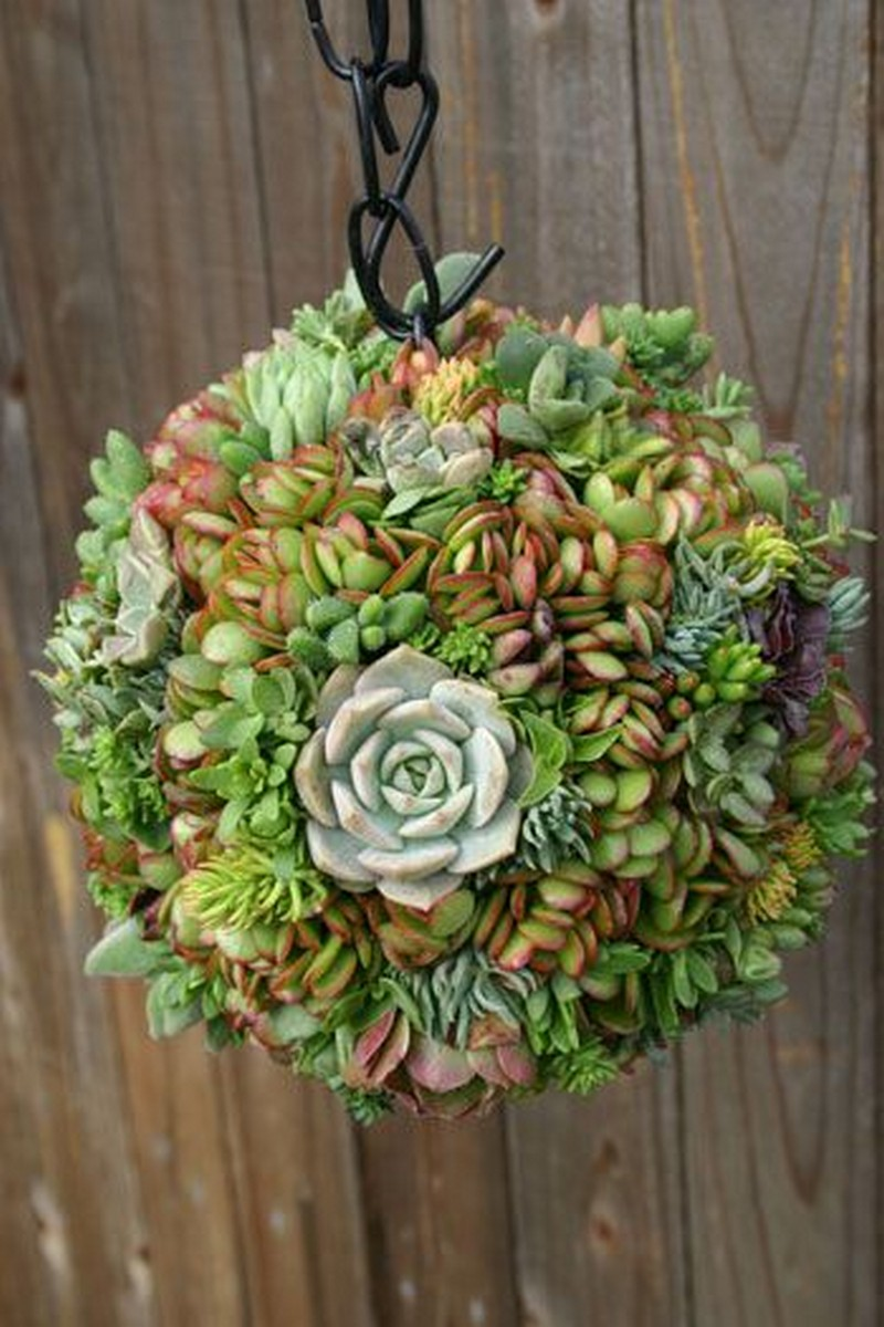 Design Succulent Planter Ideas 50 best succulent garden ideas for 2017 12 a desert sphere