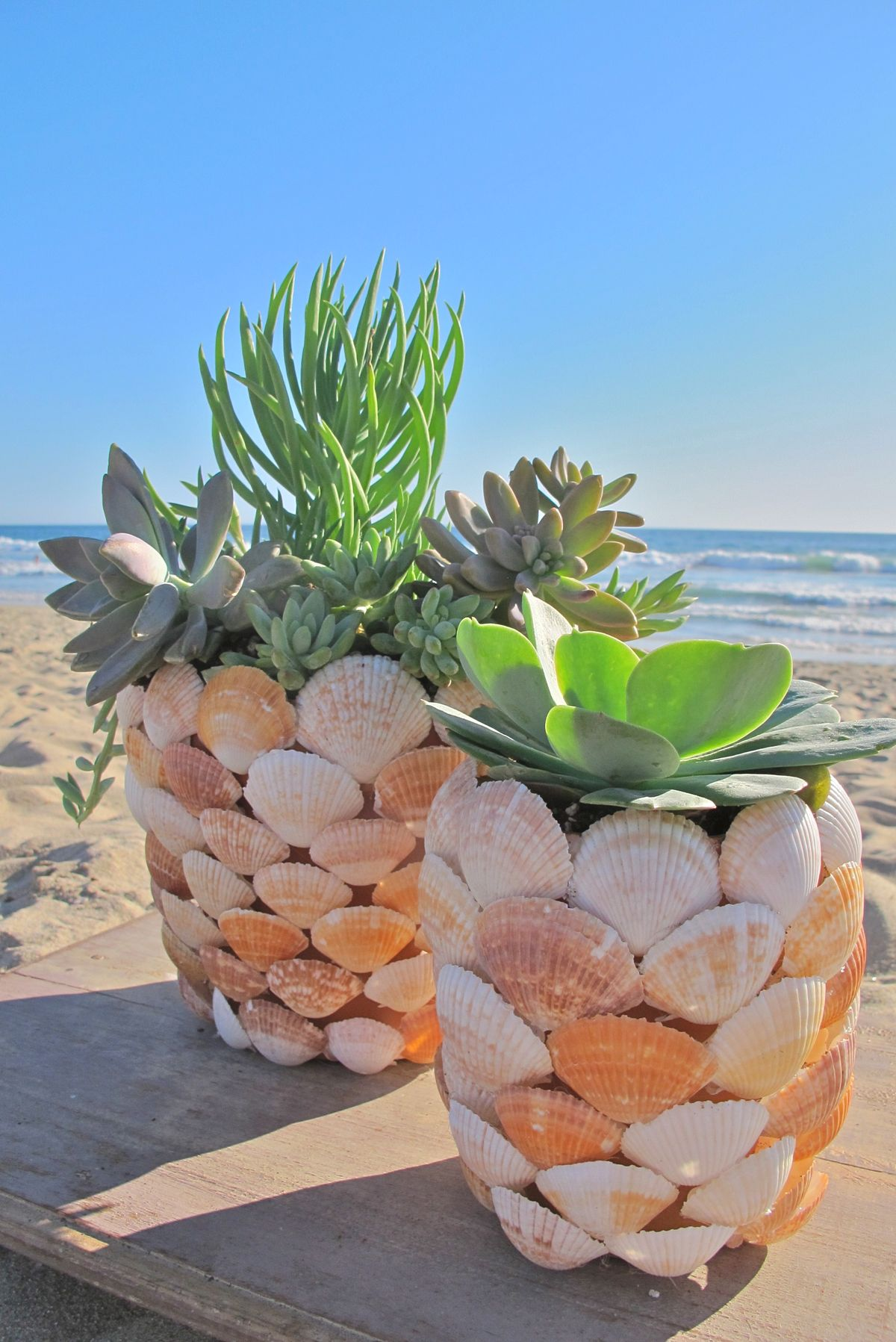 Design Succulent Planter Ideas 50 best succulent garden ideas for 2017 14 by the beautiful sea