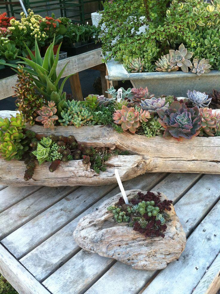 Wooden Wonderland