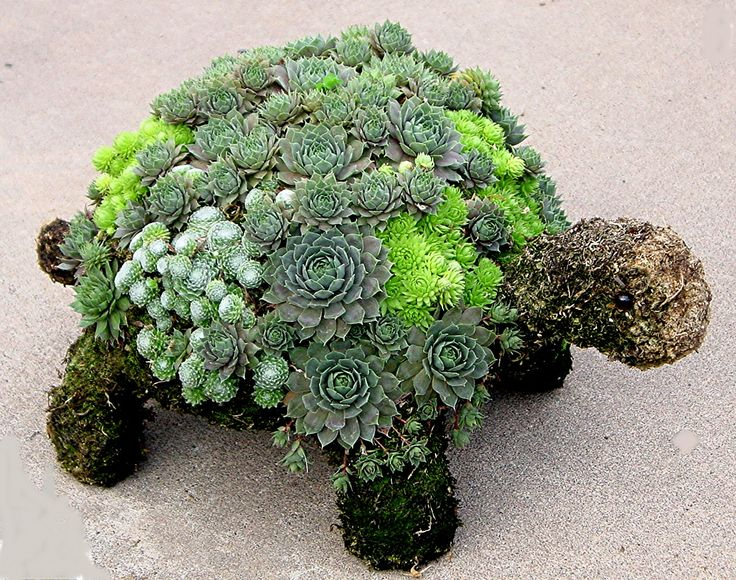 Succulents Garden Ideas 6 octopus succulent garden 21 Slower Than Molasses