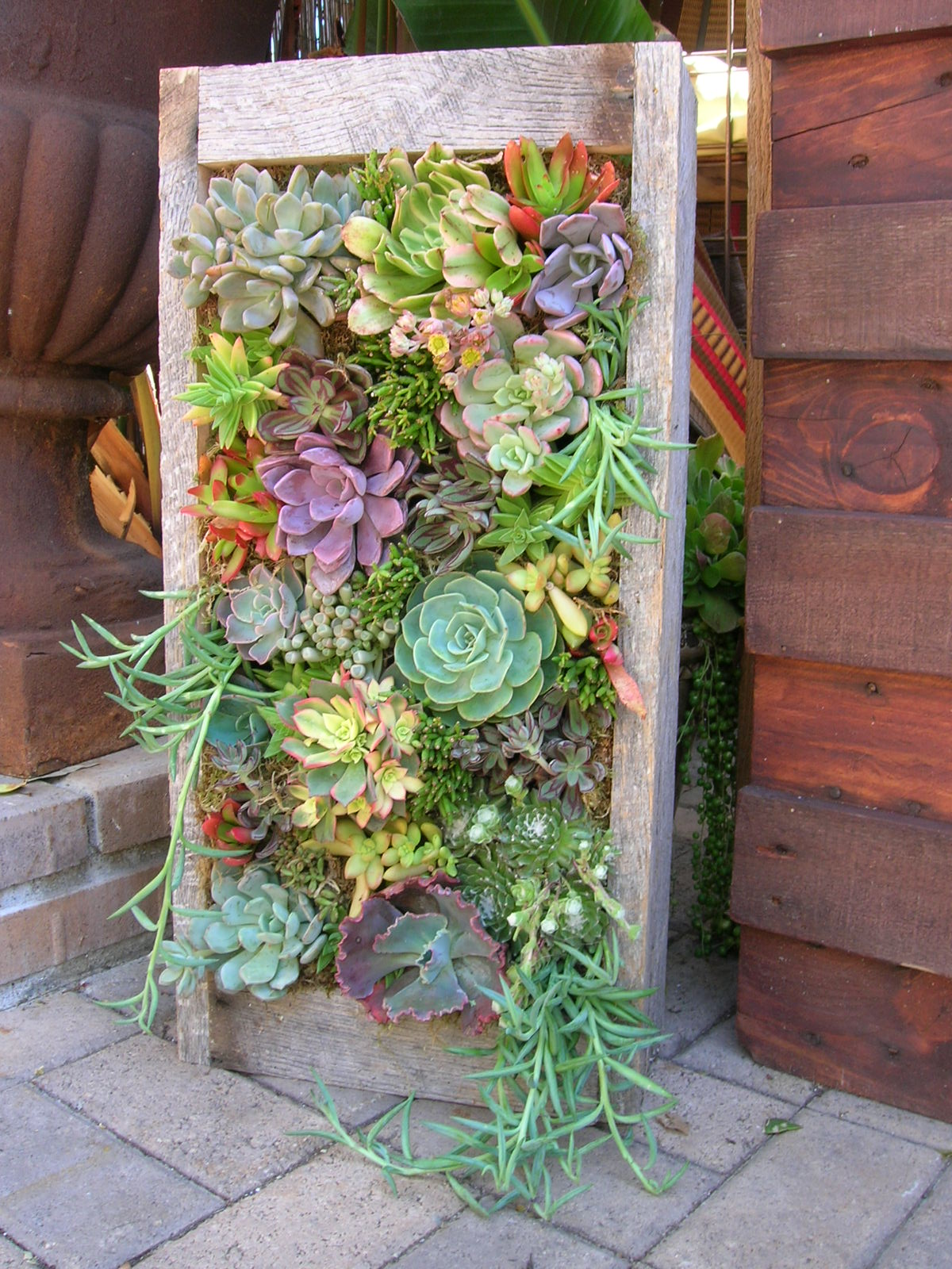 Succulents Garden Ideas 40 amazing and easy outdoor succulent garden ideas for you and your creative mind Stand And Deliver