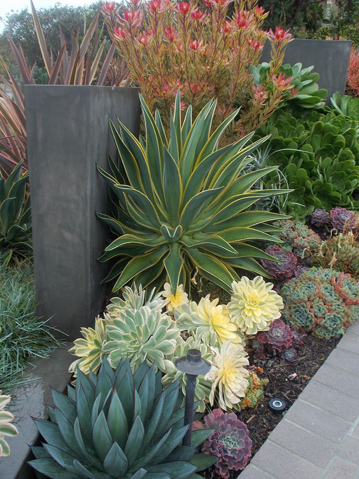 Succulents Garden Ideas 6 by the wayside 26 California Dreaming