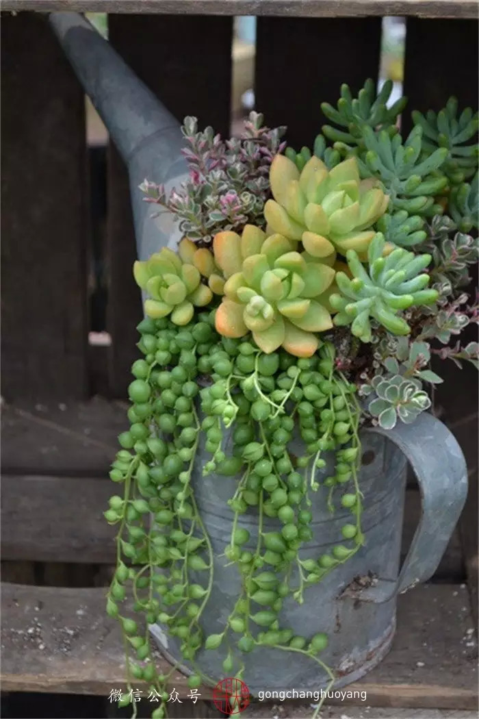 50 best succulent garden ideas for 2017 for Garden arrangement ideas