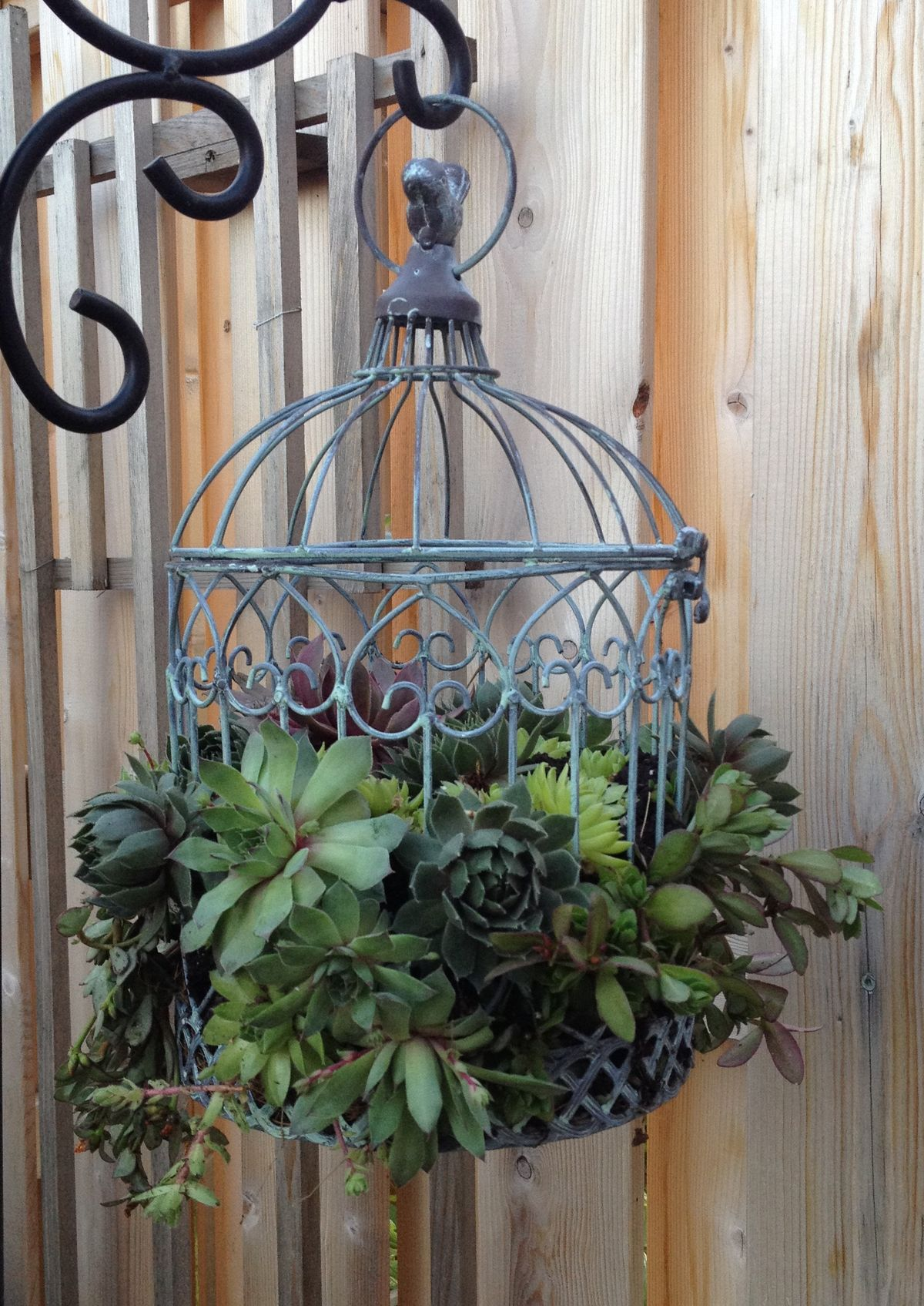 Succulence In A Birdcage