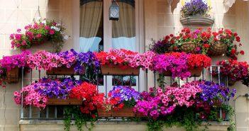 Balcony Garden Ideas