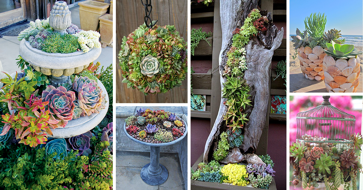 50 Best Succulent Garden Ideas for 2017 - how to design a succulent garden