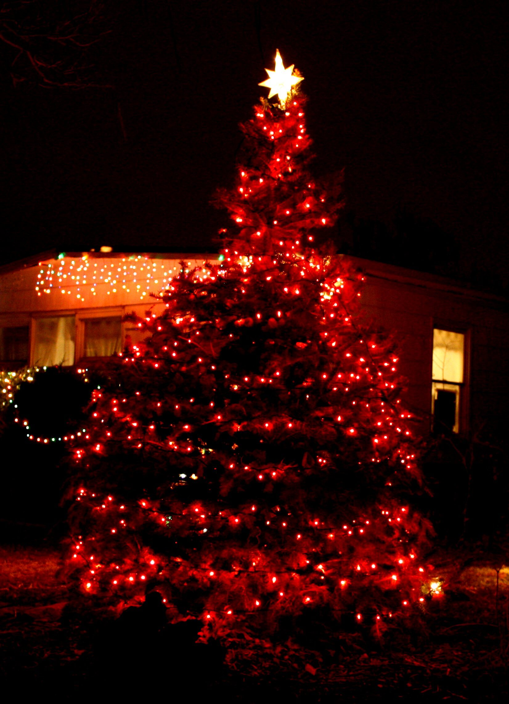 Spectacular Oversized Outdoor Christmas Tree