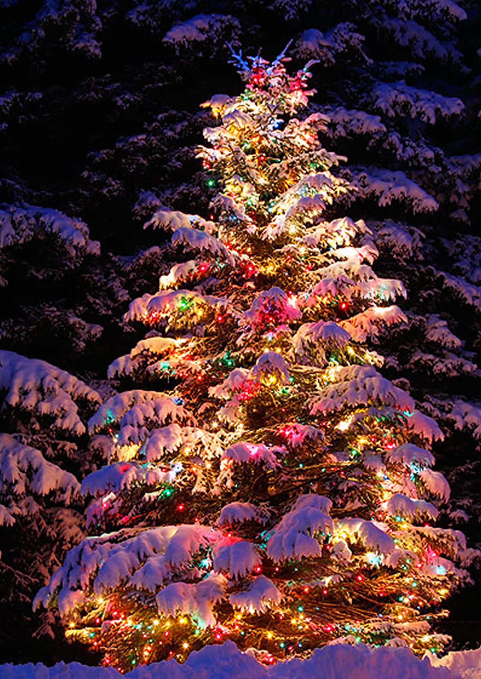christmas lights meet natural pine tree - Lighted Christmas Tree Lawn Decoration