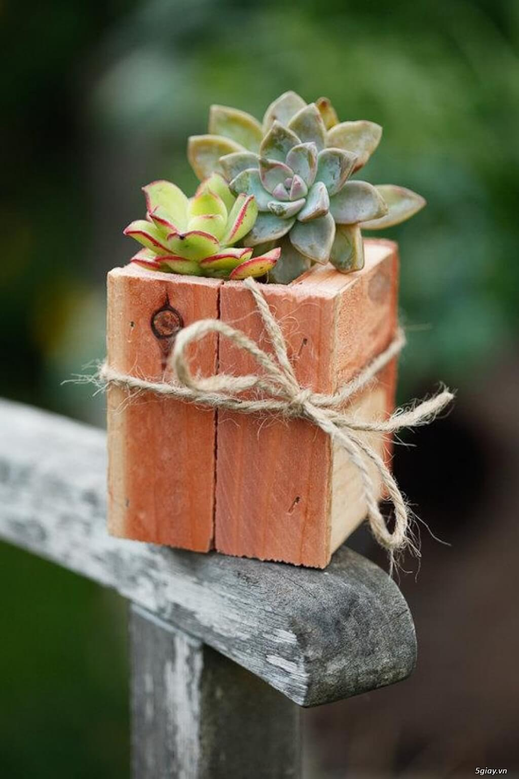 Simple Rustic Box with Real Cacti