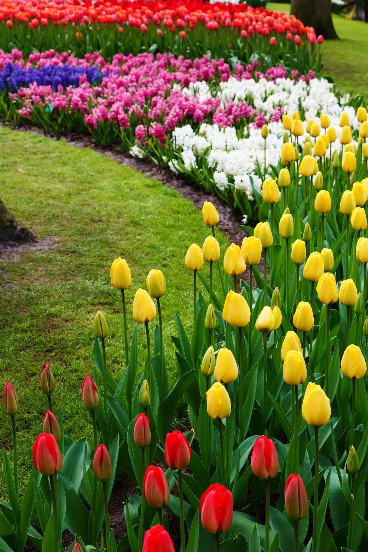 Combining Tulips with Annuals and Perennials