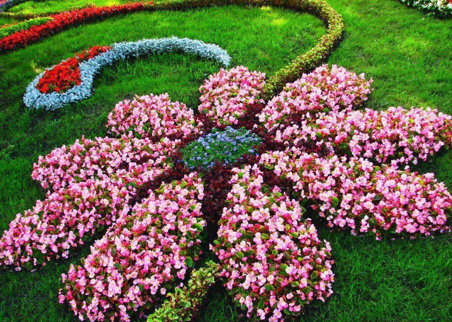 Attractive Flower Shaped Floral Garden Layout