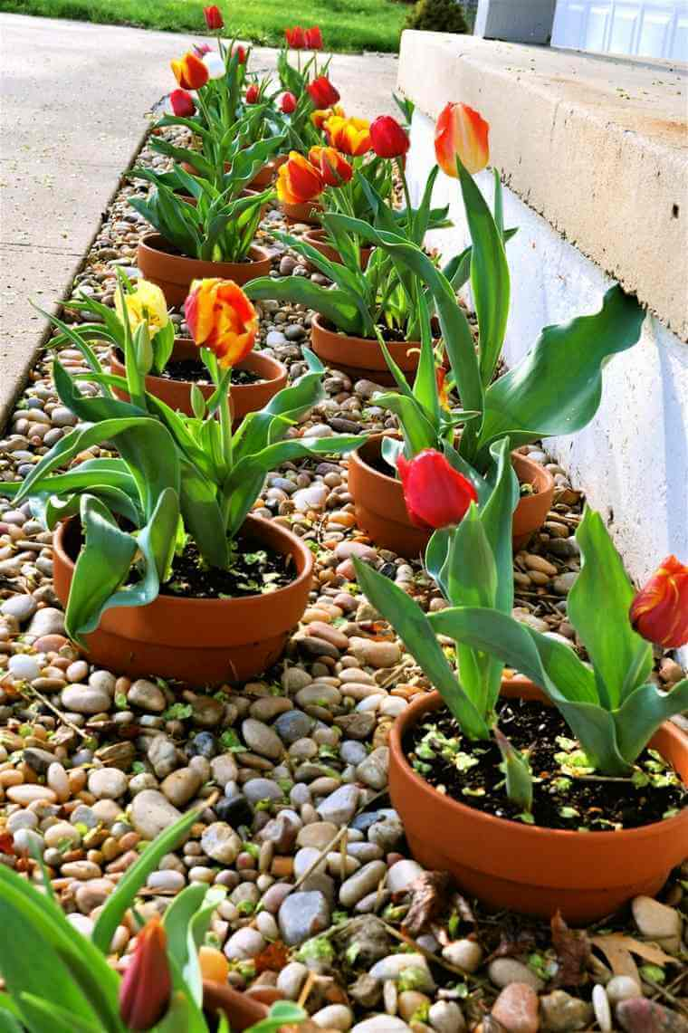 easy to update potted border - Front Yard Garden Ideas Pictures