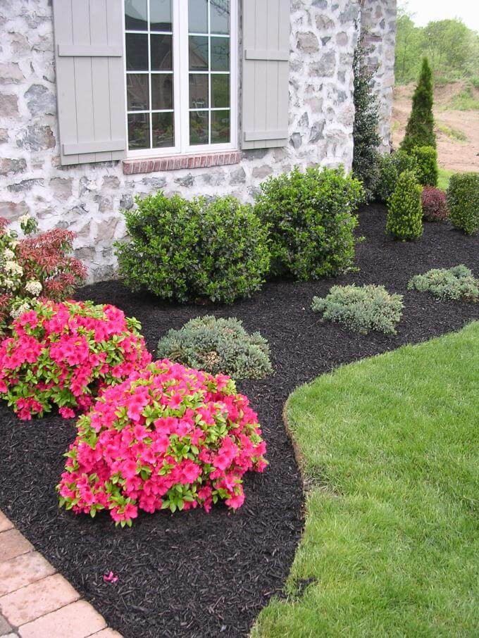low maintenance evergreen border with a pop of color - Low Maintenance Front Garden Ideas
