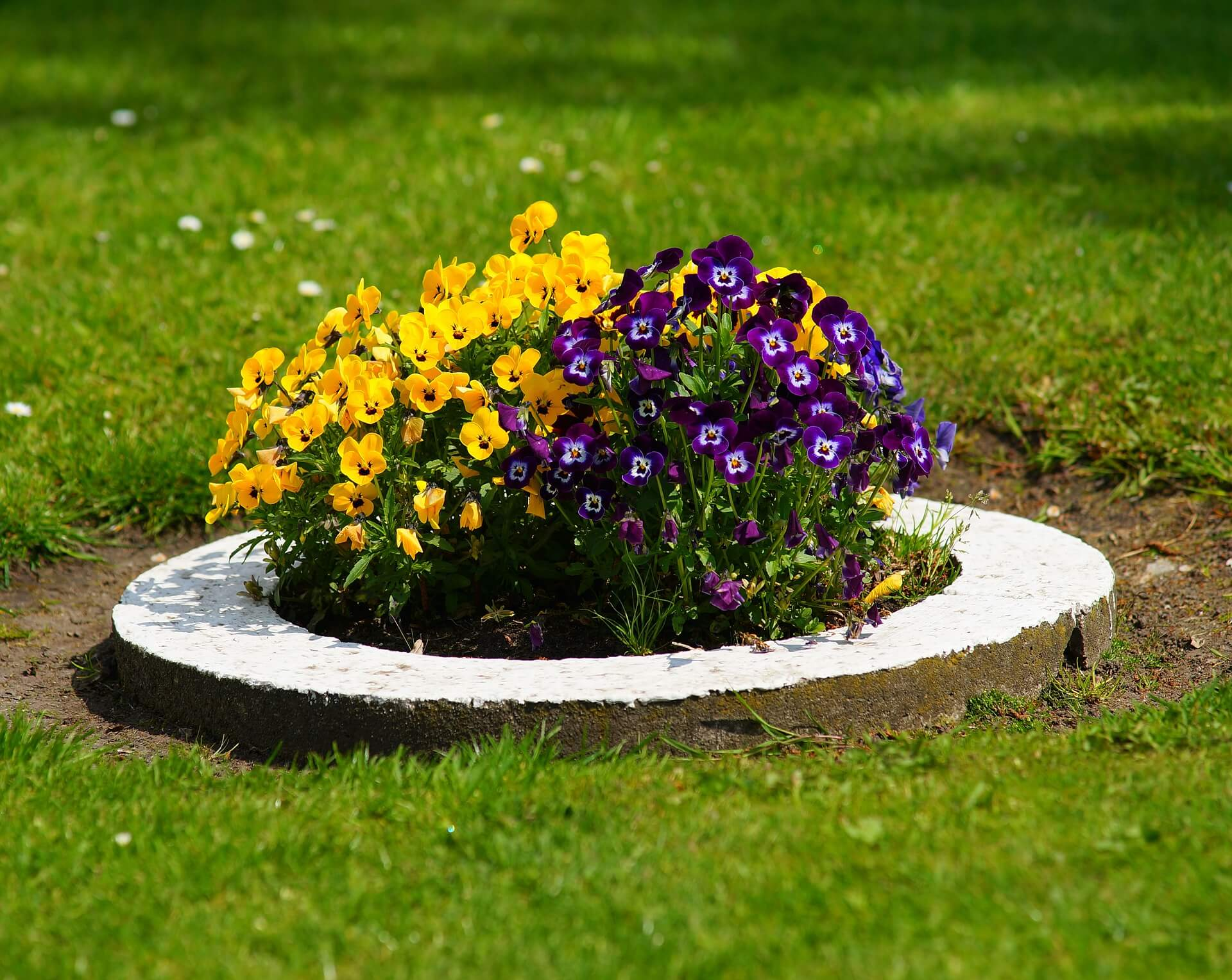 Make a Statement with a Bold, Colorful Flower Bed
