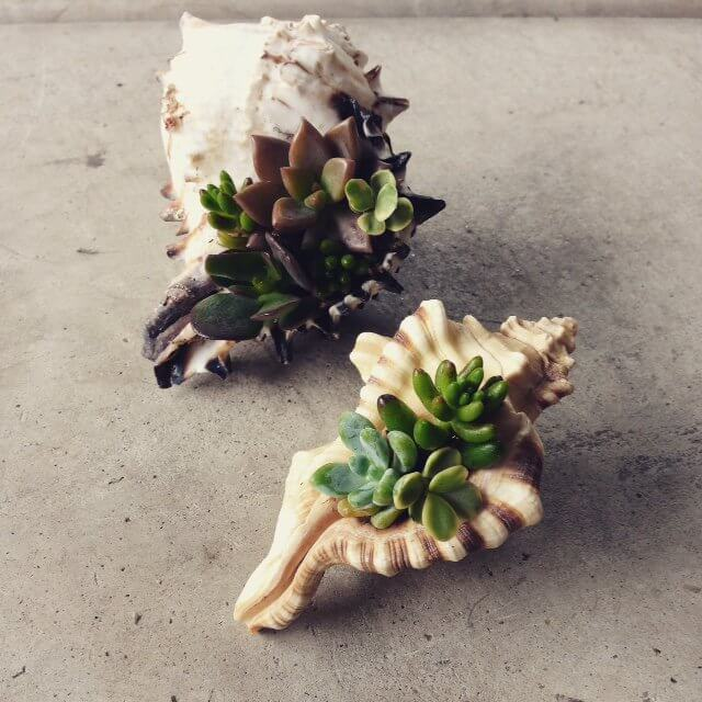 Easy DIY Seashell Succulent Container