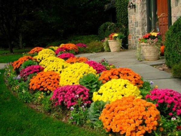 Flashy Fall Flowers