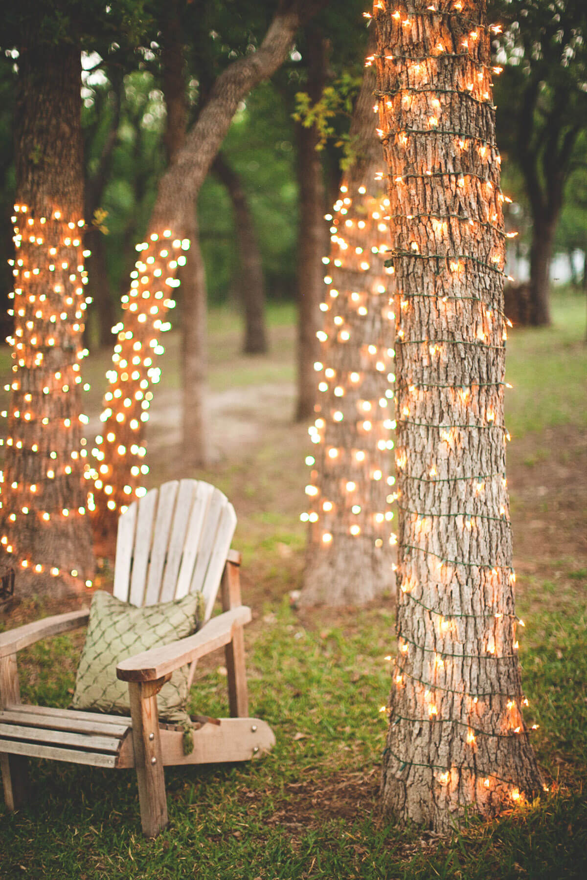 Tree Trunks Wrapped In String Lights