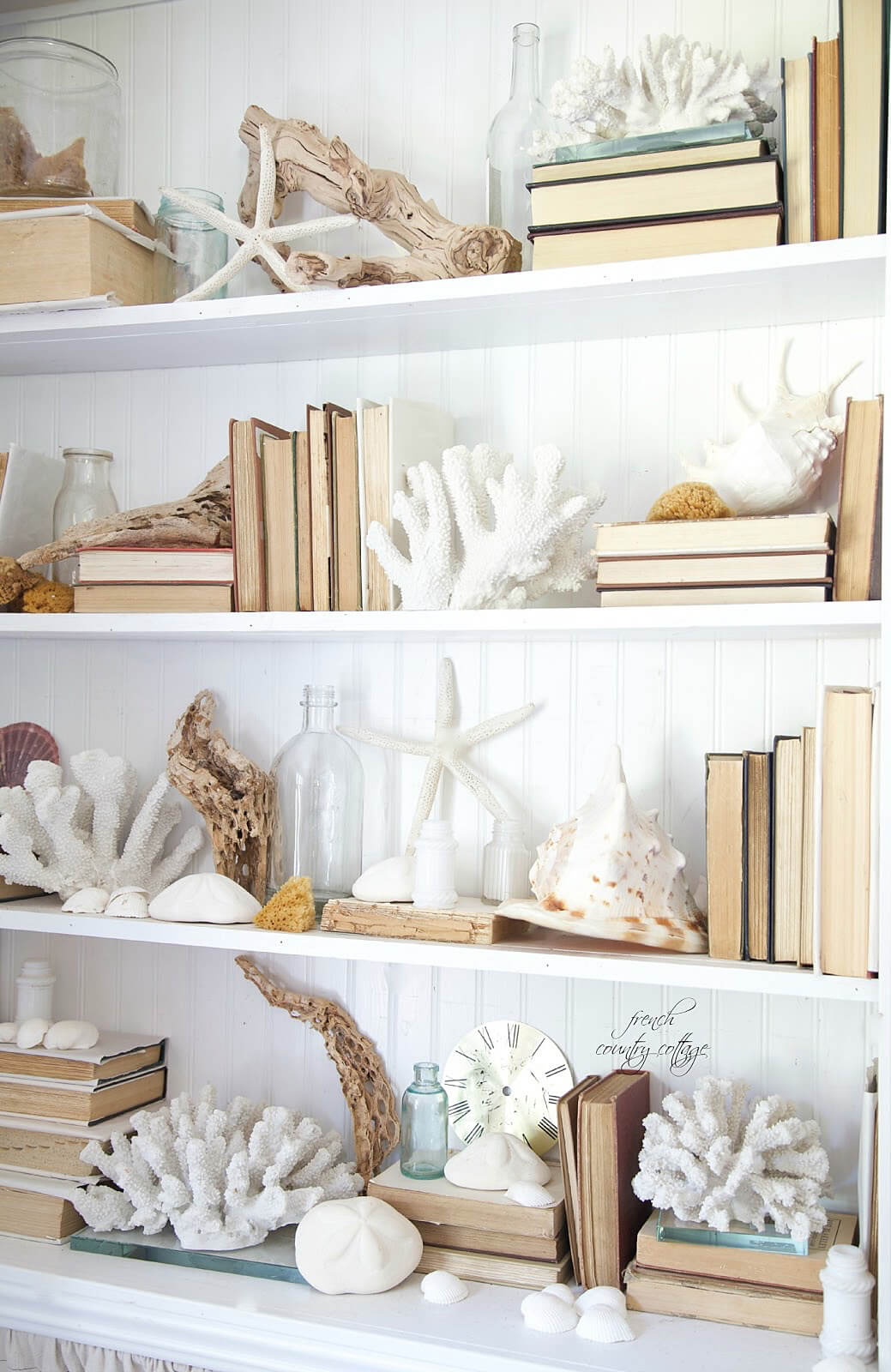 A Bookcase Crawling with Coral and Shells