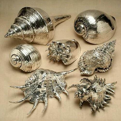 Seashells that Have Been Touched by Gold