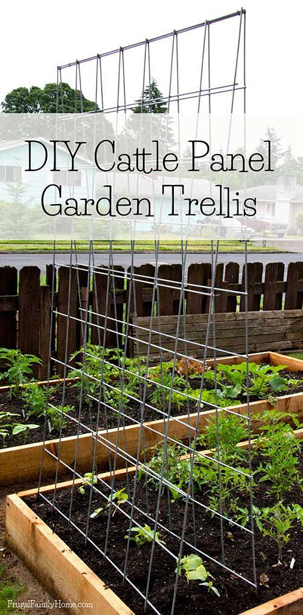 Cattle Panel Bean Trellis for Raised Beds
