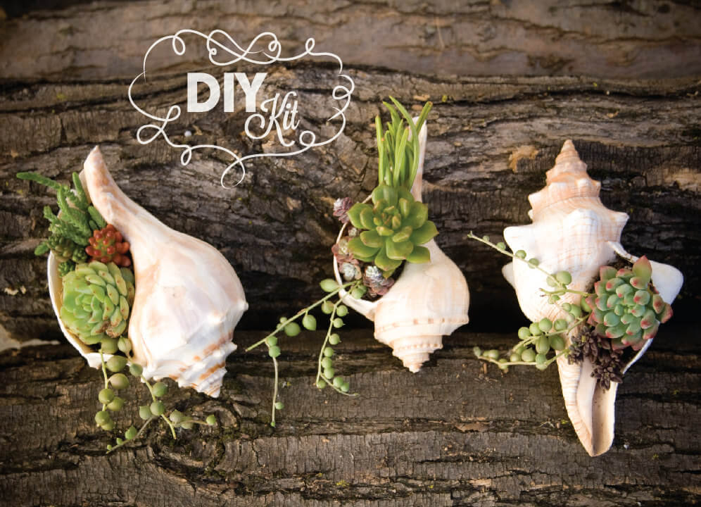 Hanging Succulent Planters Made From Conch Shells