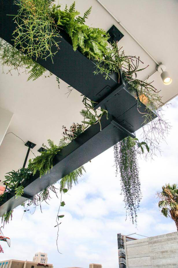 Dramatic Urban Outdoor Hanging Garden