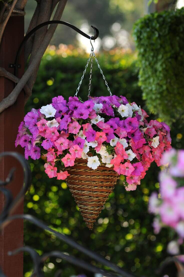 Pretty Cone Shaped Petunia Planter