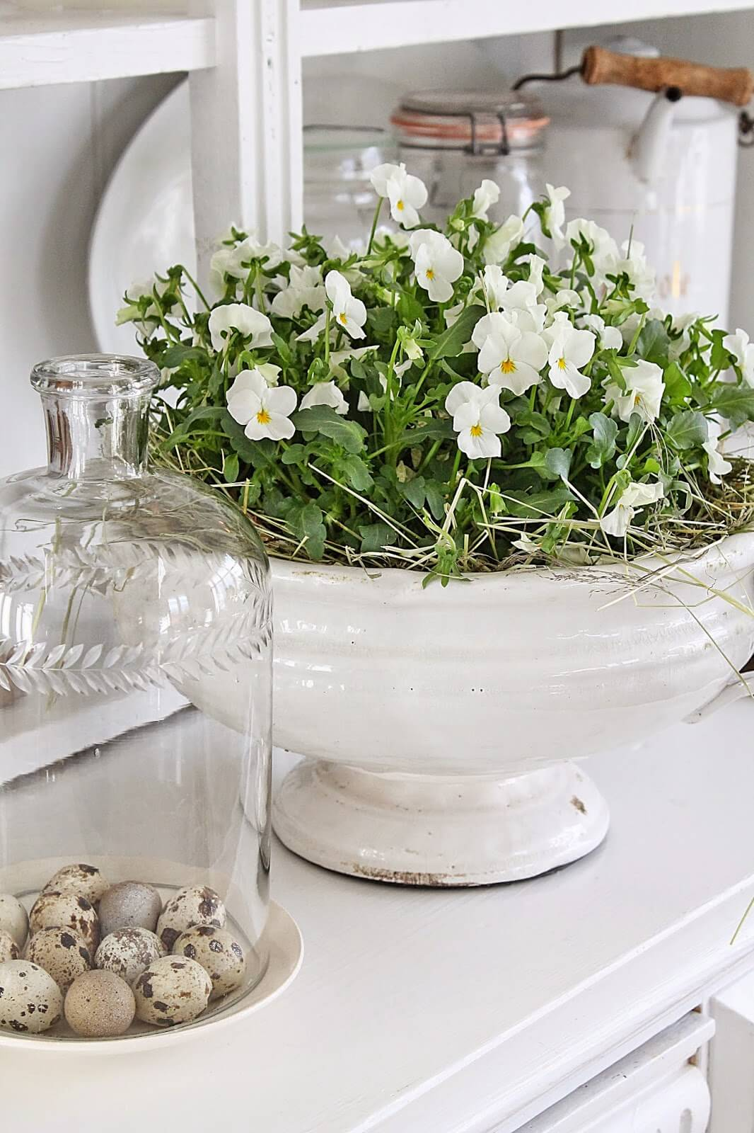 White Violas Planted in Antique Ceramic Dish
