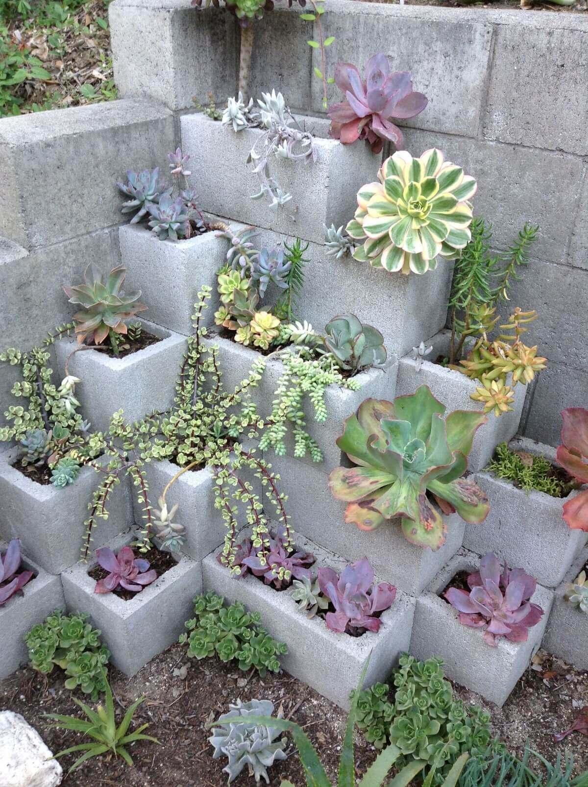 Cozy Corner Succulent Garden with Cinder Blocks