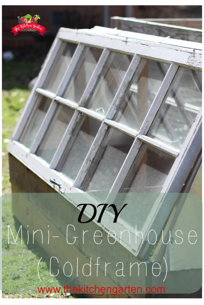 A Coldframe Green House with Easy Access