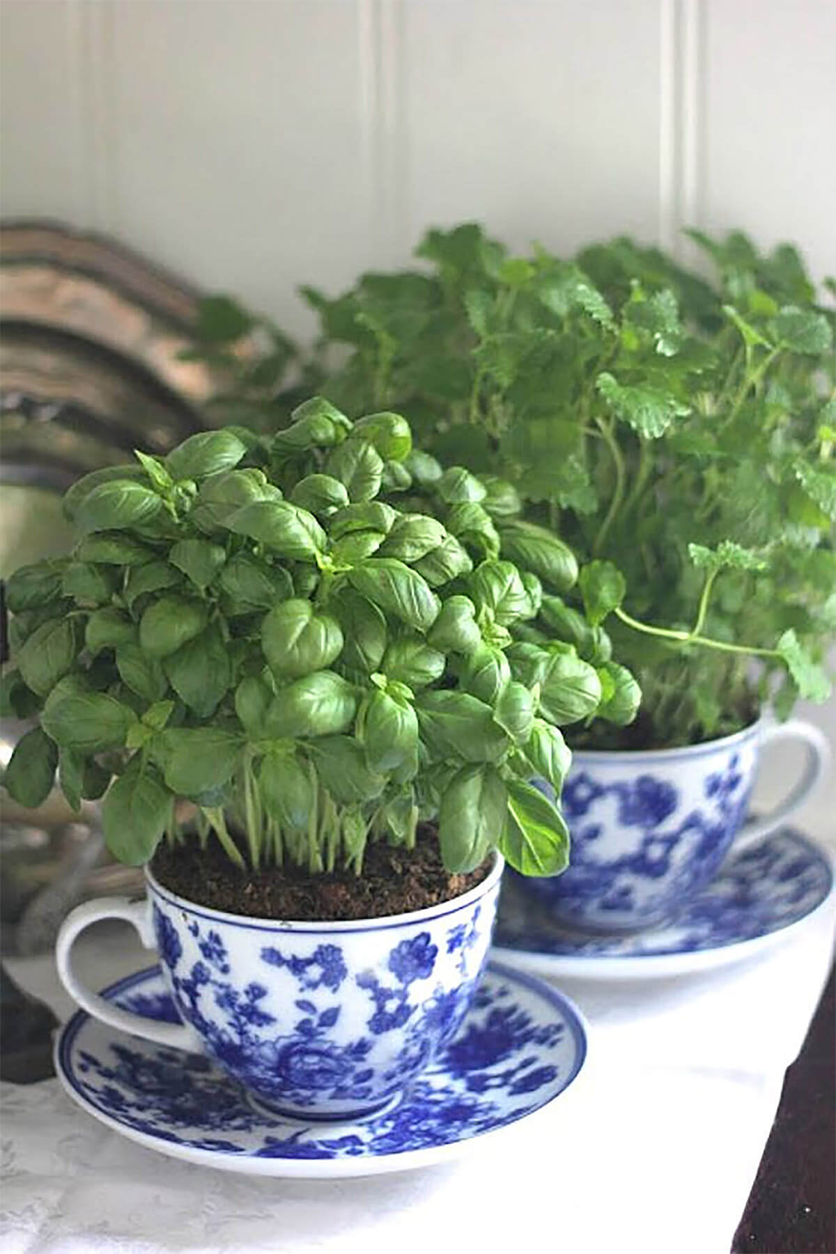 China Tea Cup Mini Herb Garden