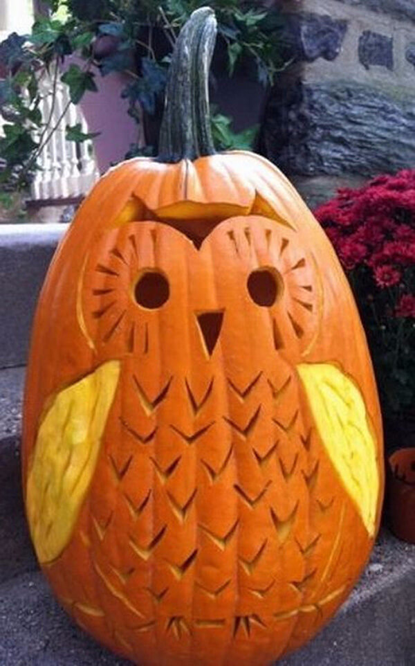 what a hoot - Unique Pumpkin Carving Ideas
