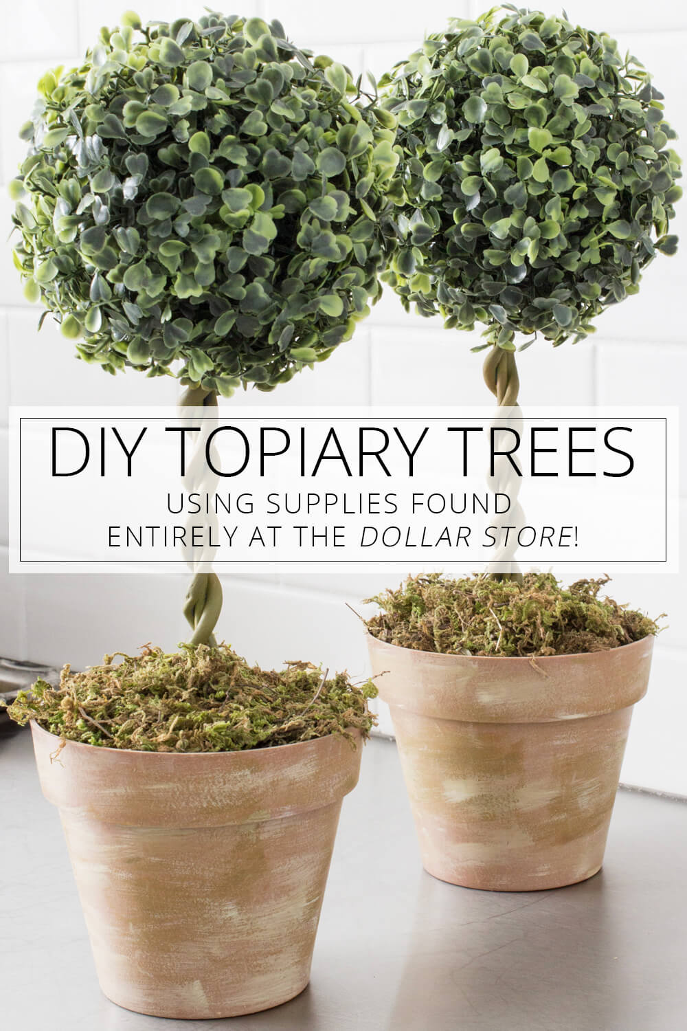 Elegant Potted Topiaries on the Cheap