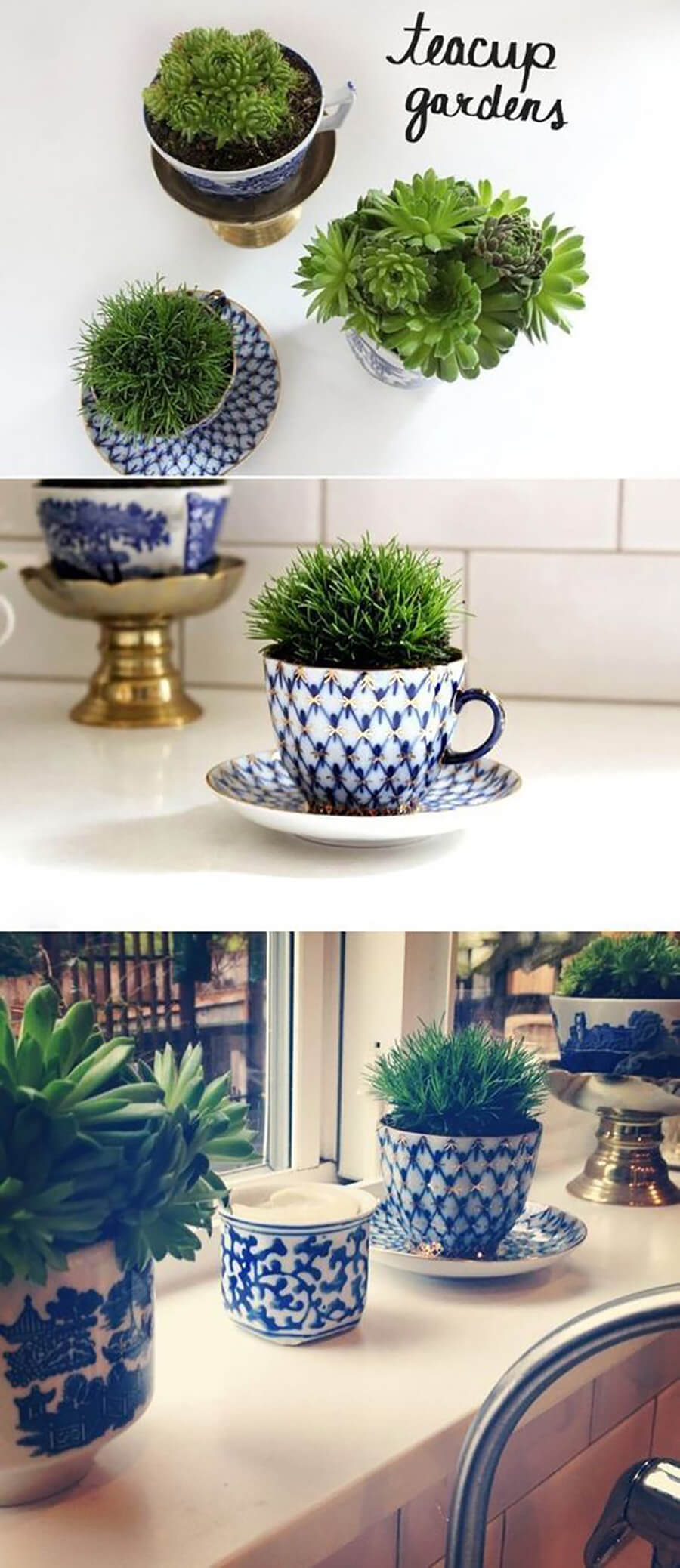 Fill a Cup with Succulents