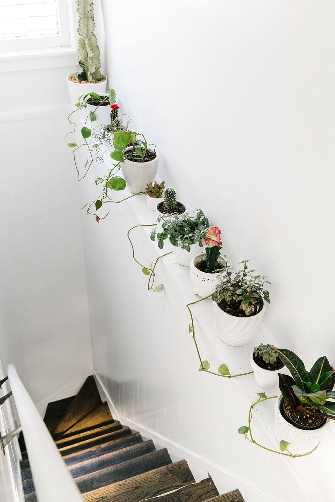 Smart Way to Squeeze in More Plants