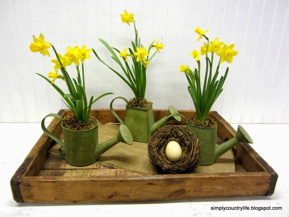 Mini Daffodils in Watering Cans