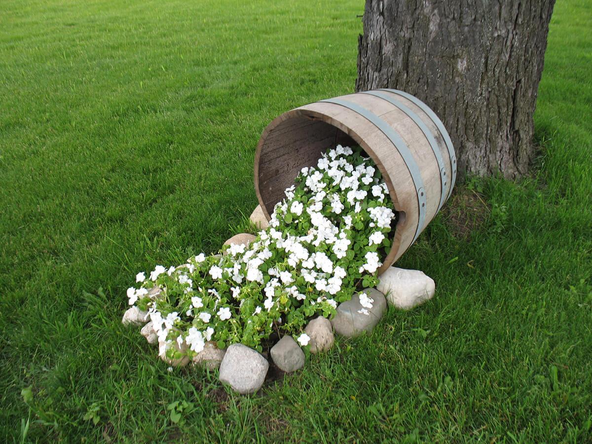 White Petunias Tumbling on the Lawn