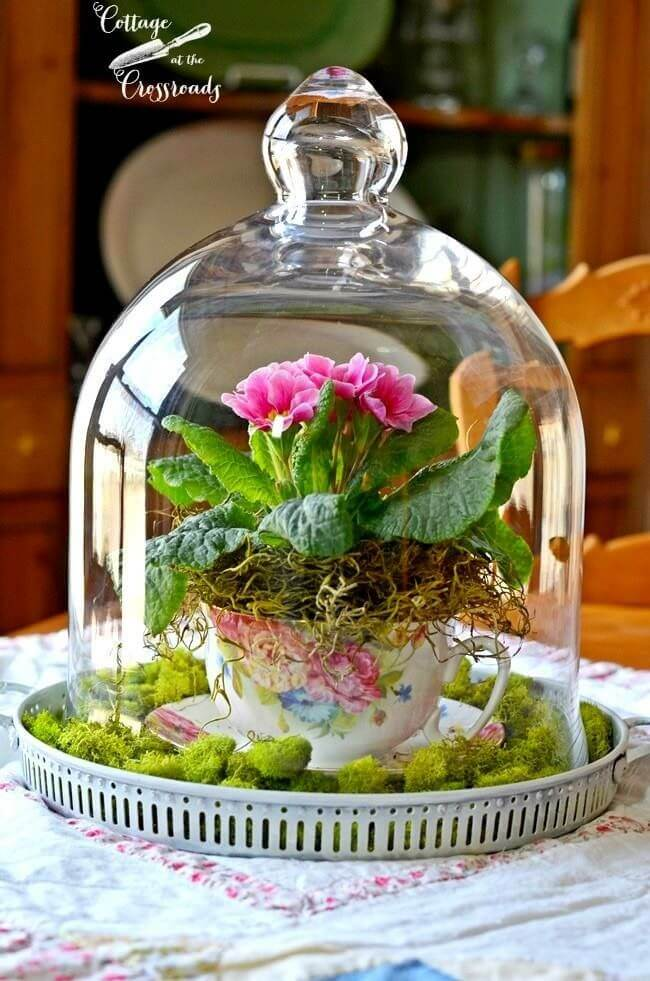 Flowers in a Teacup Under Glass