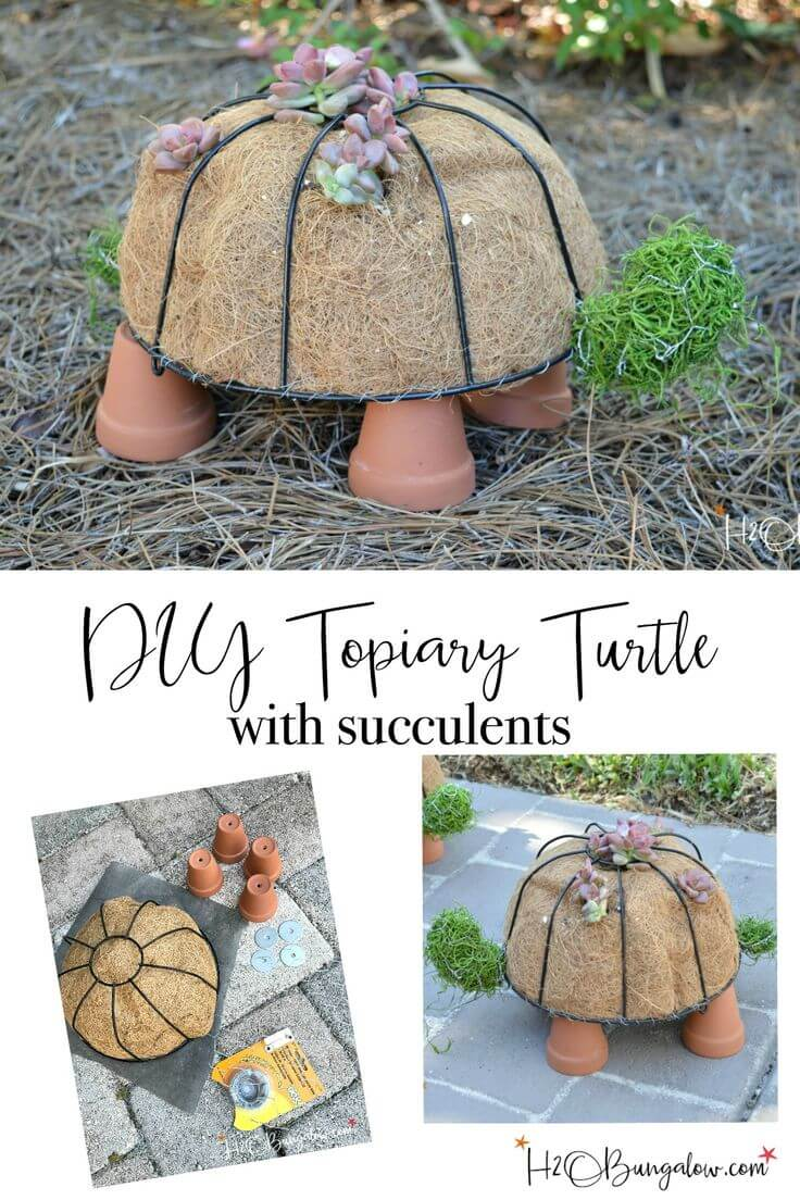 Topiary Turtle with Cute Succulents