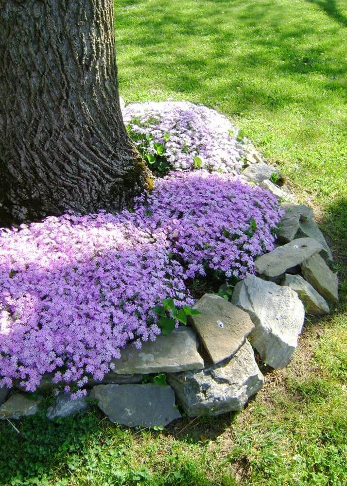 Flowers and Natural Stones Around a Tree