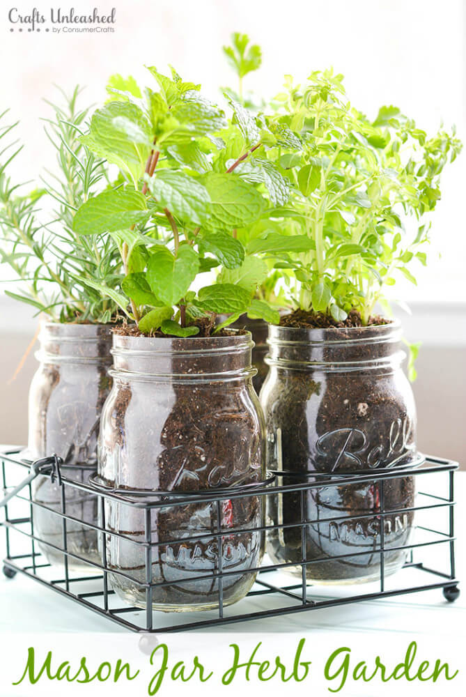 Plant Herbs in Mason Jars