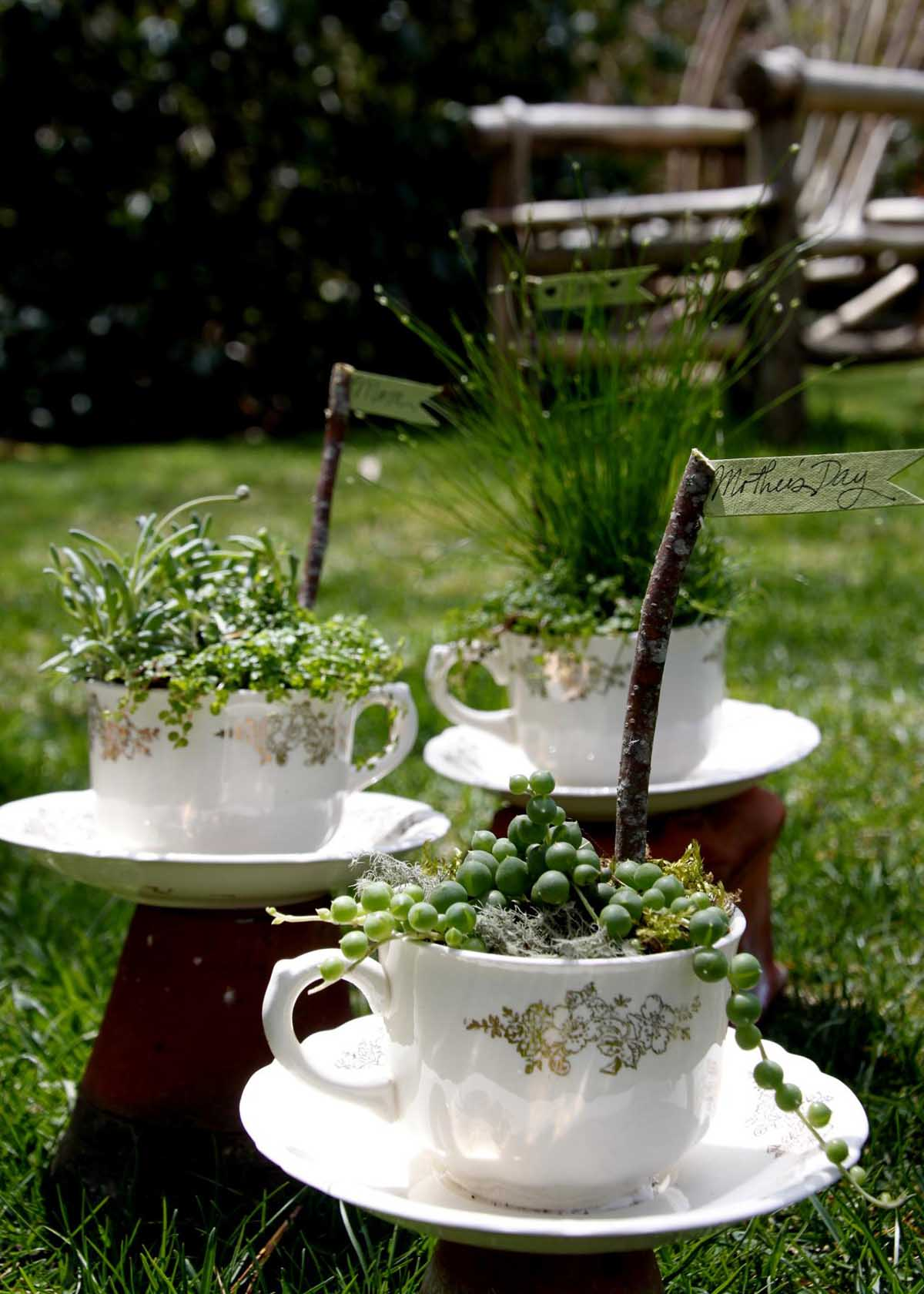 Plant Assortment Gives Variety to Matching Teacups