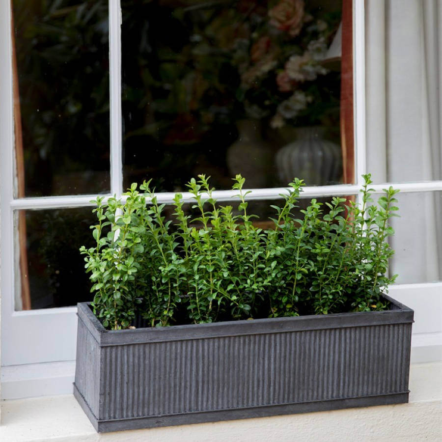 Ridged Dark Metal Window Box With Greenery