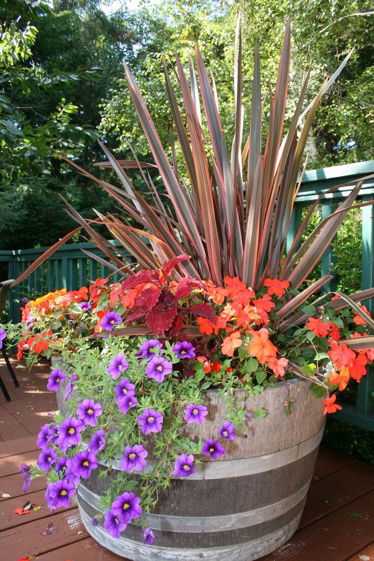 Oversized Barrel Planter with Grasses and Petunias