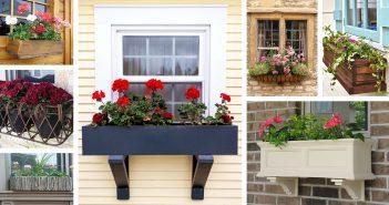 Ideas for Window Box Planters